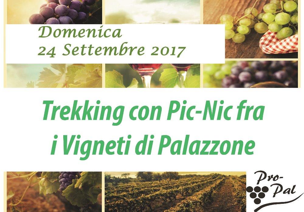 Trekking con Pic-Nic fra i Vigneti  Il 24 Settembre a Palazzone